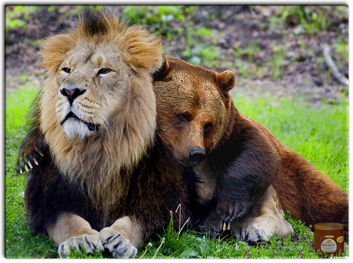 animal love 0